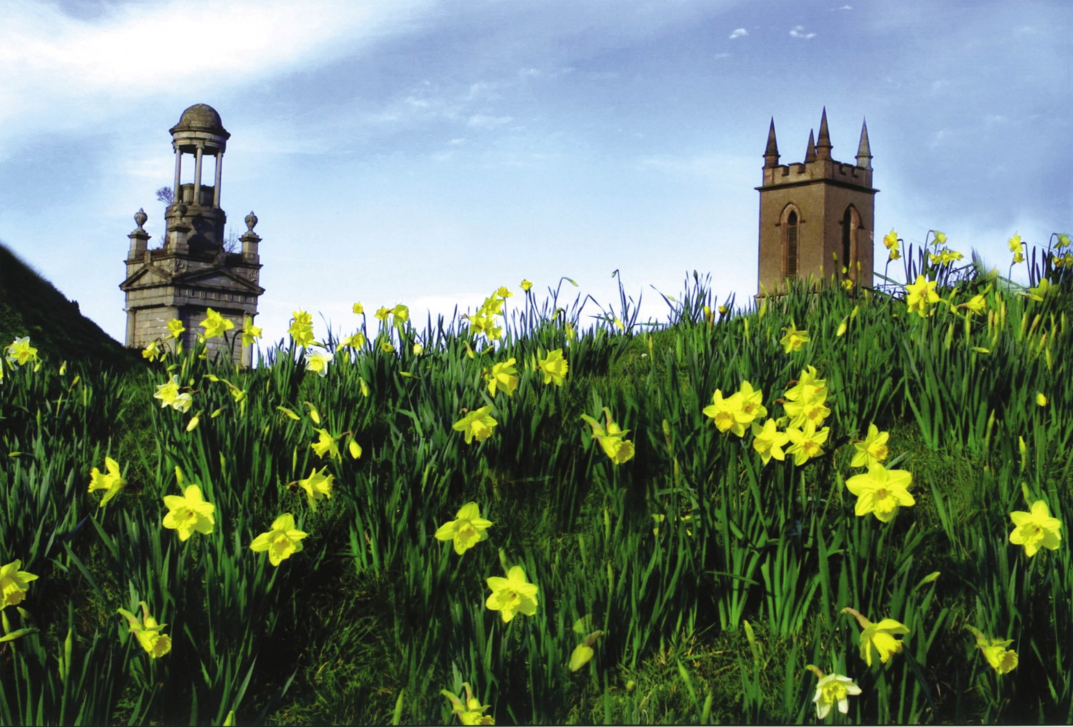 Church and bell tower behind field of daffodils