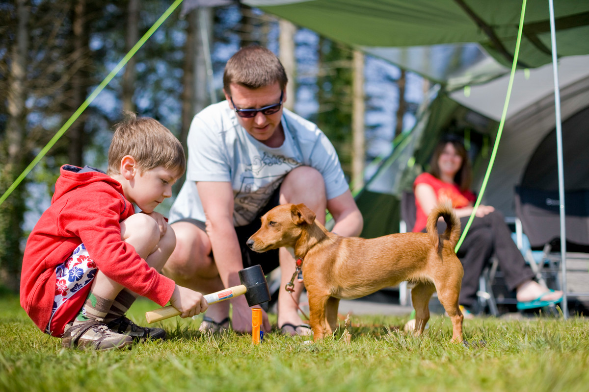 Boy helps man with tent peg as woman watches on smiling. Little brown dog in foreground